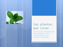 las plantas aromaticas