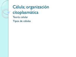 teoría celular, tipos de clelula y organelos