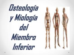 Osteología y Miología del Miembro Inferior