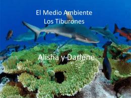 El Medio Ambiente Los Tiburones