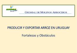 PRODUCIR Y EXPORTAR ARROZ EN URUGUAY