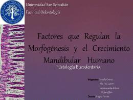 Factores que Regulan la Morfogénesis y el Crecimiento Mandibular