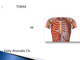TORAX - Fisioterapia