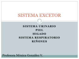 sistema excretor - monicagonzalezvera