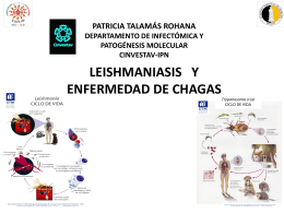 Dra. Patricia Talamas Rohana