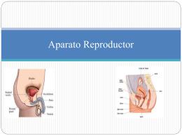 Aparato_Reproductor[1]