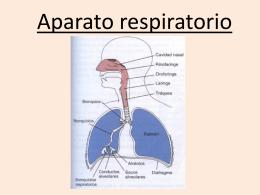 Clase teórica respiratorio.