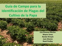 Guía de Campo para la Identificación de Plagas del Cultivo de la