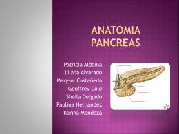 ANATOMIA PANCREAS - Carpe Diem – Cogito ergo sum