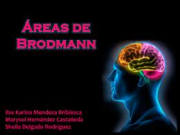 Áreas de Brodmann - Carpe Diem – Cogito ergo sum