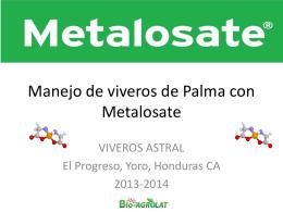 Manejo de viveros de Palma con Metalosate