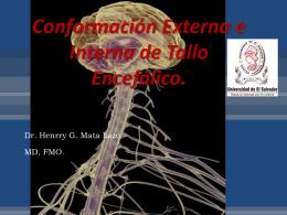 7 Conformación interna y externa de medula tallo cerebral
