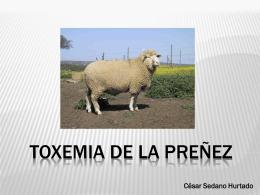 TOXEMIA DE LA PREÑEZ