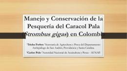 Manejo y Conservación de la Pesquería del Caracol Pala (Strombus