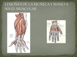 Lesiones nivel muscular muñeca ppt