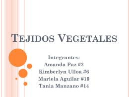 Tejidos Vegetales - biologialasalle4-4
