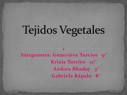 Tejidos Vegetales - biologialasalle4-3