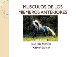 MUSCULOS DE LOS MIEMBROS ANTERIORES