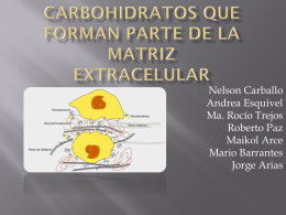 carbohidratos que forman parte de la matriz