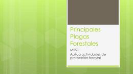 Principales Plagas Forestales