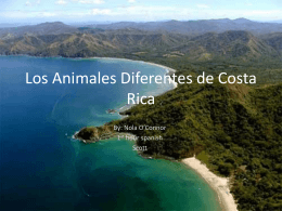 Different Animals of Costa Rica - Nola O`Connor