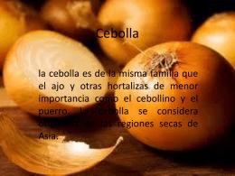 Cebolla - WordPress.com