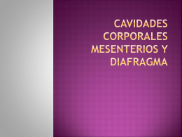 Cavidades corporales mesenterios y diafragma