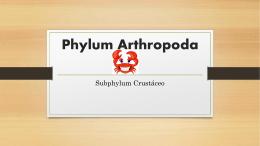Phylum Arthropoda Monica (2482735)