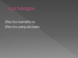 Los hongos - Micologiaunsl