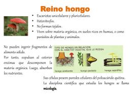 El reino hongo - Apuntesdeciencias