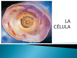 partes de la célula ii