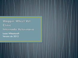 Waggin* Wheel Vet Clinic Internado Veterinario