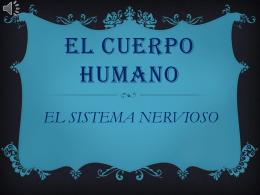 exposición cuerpo humano sistema nervioso by