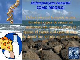 """Debaryomyces hansenii como modelo"", Dra. Luisa Alba Lois"