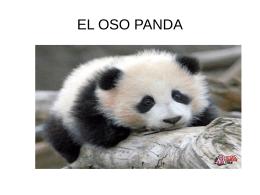 EL OSO PANDA - CEIP La Zafra