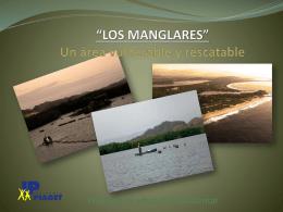 *LOS MANGLARES* Un área vulnerable y rescatable