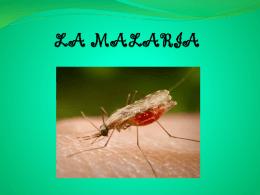 LA MALARIA - CMCFJBURGOS