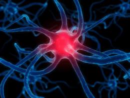Tumores Cerebrales Primarios