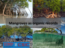 Mangroves as organic records - Instituto Mediterráneo de Estudios