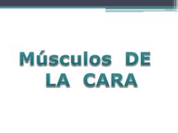 MUSCULOS DE LA CARA - – Educare Perú – | – AV.