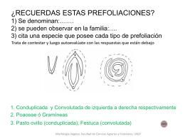 ¿ RECUERDAS ESTAS PREFOLIACIONES? 1) Se
