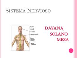 Sistema Nervioso - nutricion | Departamento de