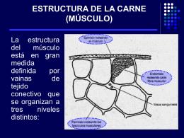 ESTRUCTURA DE LA CARNE (MÚSCULO)