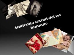 Anatomía sexual del ser humano