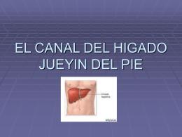 EL CANAL DEL HIGADO JUEYIN DEL PIE