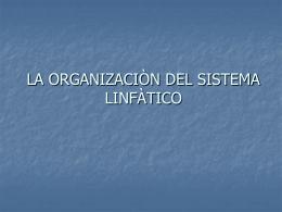 LA ORGANIZACIÒN DEL SISTEMA LINFÀTICO