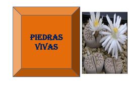 PIEDRAS VIVAS