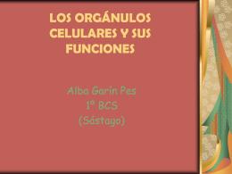 LOS ORGÁNULOS CELULARES Y SUS FUNCIONES