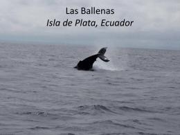Las Ballenas Isla de Plata, Ecuador