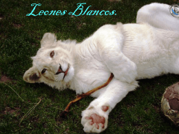 Leones Blancos.